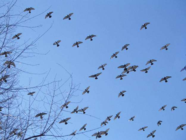 鳩が自宅に巣を作り始める前に対策を!最小限の被害に抑える方法とは!?